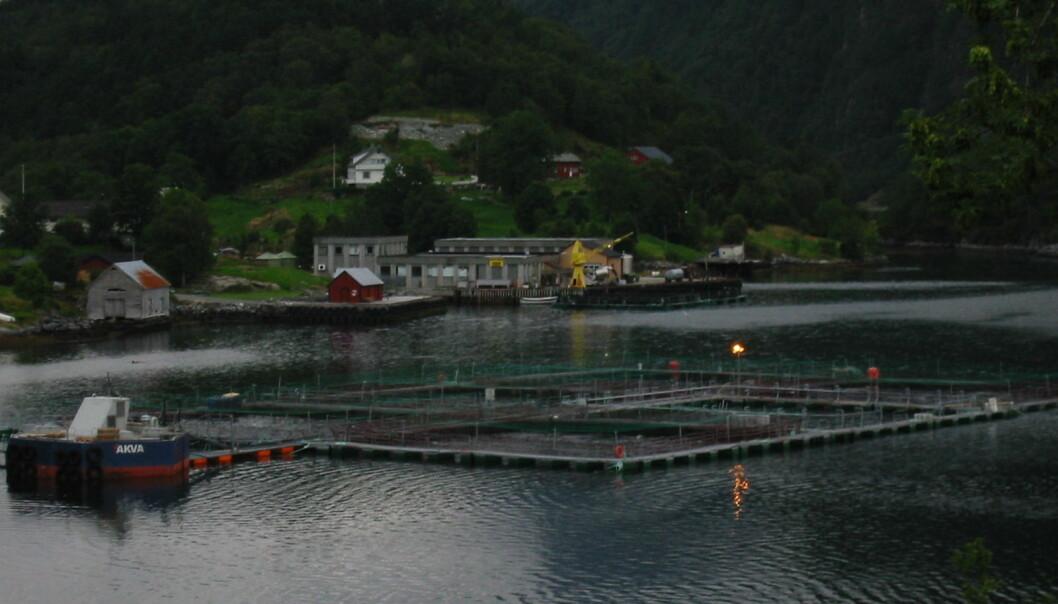 Oppdrettsanlegg i Rugsund.