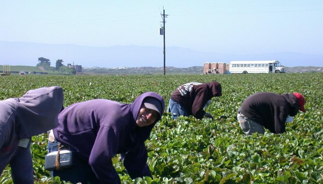 Mange innvandrere fra Latin-Amerika til USA har lav utdanning. Det hindrer dem ikke i å jobbe.